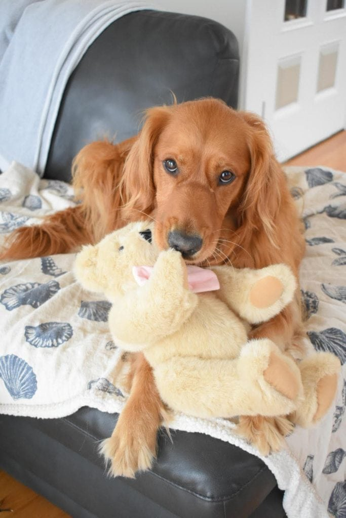 Penny and her Vermont Teddy Bear