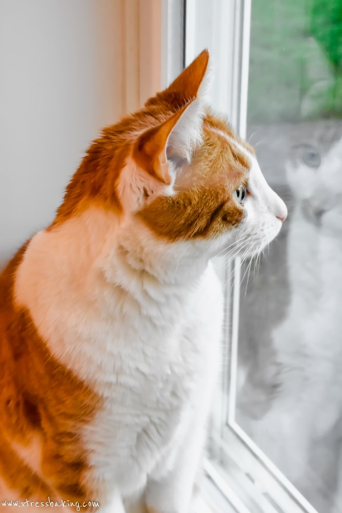Orange and white cat on a windowsill