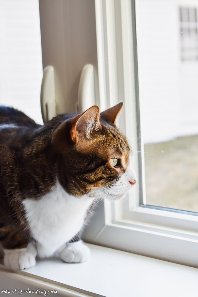 Brown cat on a windowsill