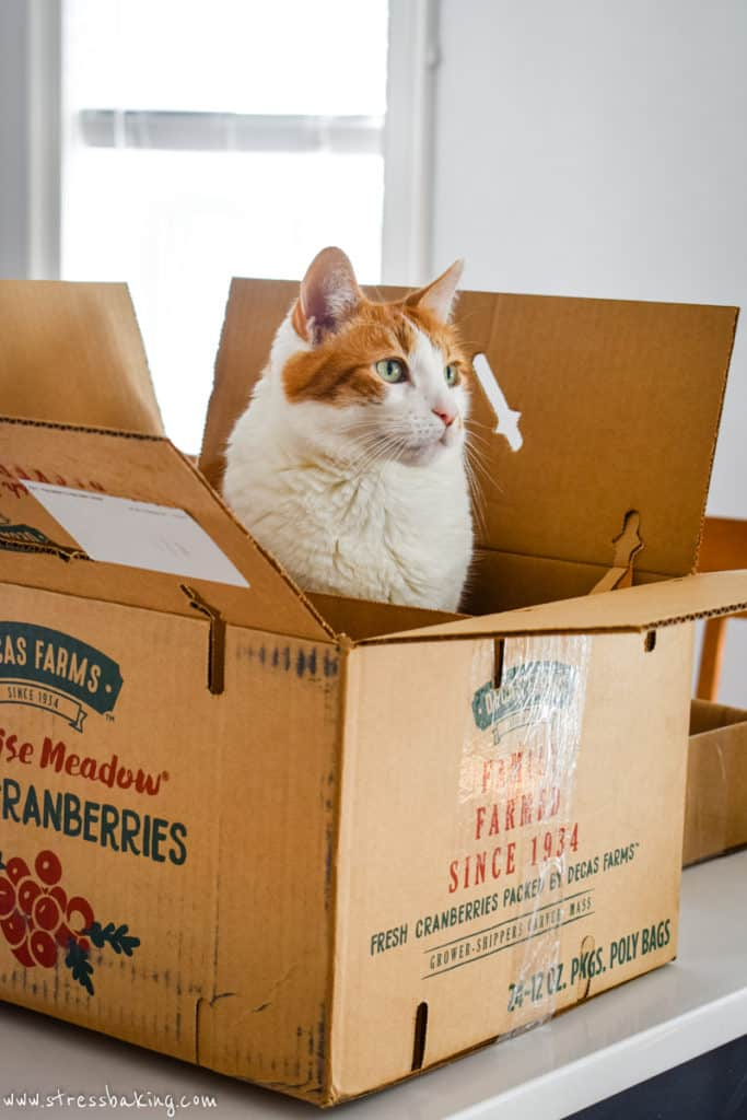 Orange and white cat sitting in a cardboard box