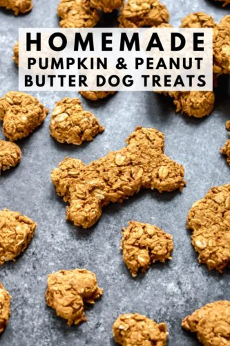 A counter full of pumpkin peanut butter dog treats shaped like bones and hearts