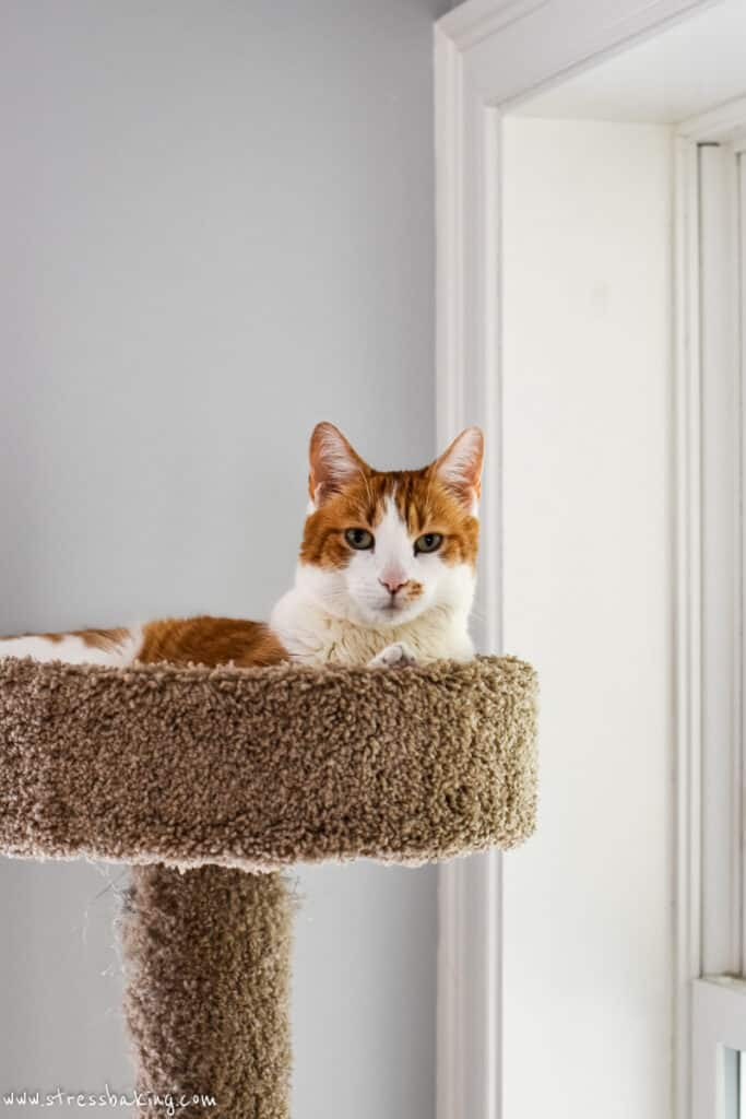 Orange and white cat on top of a perch
